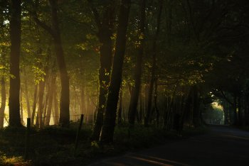 Light rising through the trees at Cromvoirt